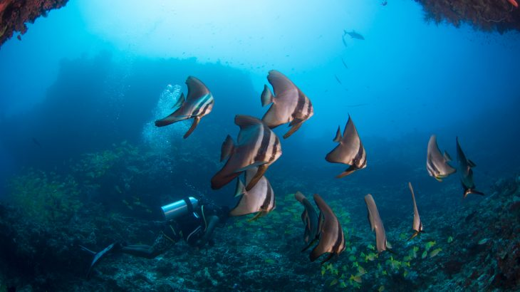 According to new research, the ocean experienced a global shift around 170 million years ago when predator-prey relationships took control of the fate of the food web.