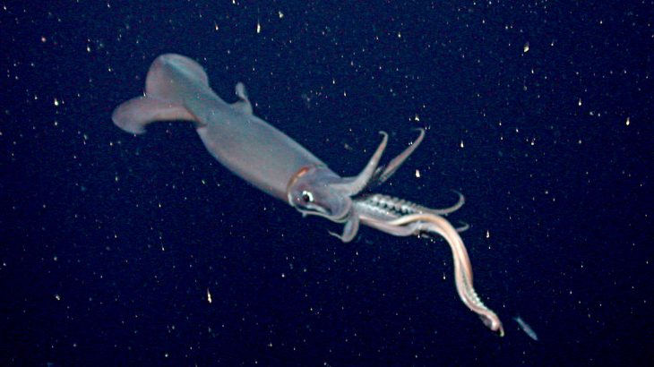 Researchers from the University of Stanford discovered that shifting weather patterns and changes in the ocean played a major role in the collapse of the jumbo squid fishery.