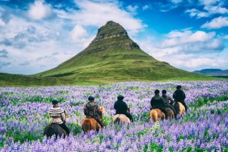 Iceland horse tour