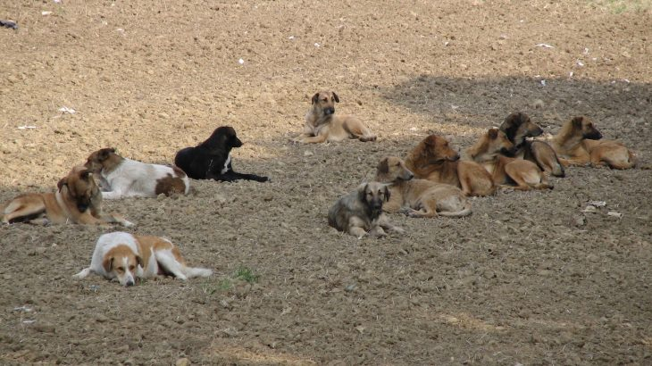 Dogs in the middle of the pack are more likely to assert their dominance in hopes of moving up and establishing a pecking order.