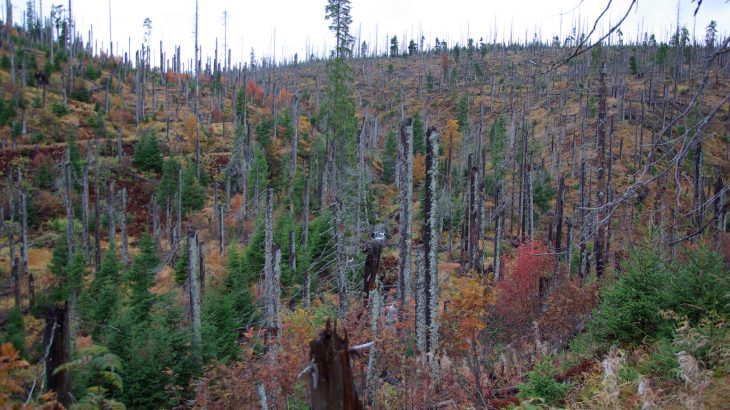 A population boom of bark beetles caused the destruction of about 40 million cubic meters of wood in Central Europe.