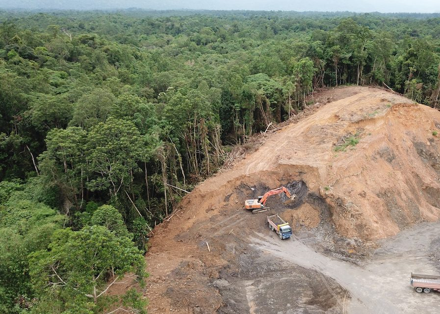 Researchers have identified more than 100 million hectares of destroyed lowland tropical rainforests (that could potentially be restored to combat rising temperatures.