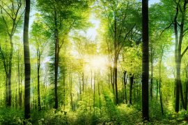 Critical new research from the Crowther Lab has revealed that restoring forests is the single most effective solution for mitigating climate change.