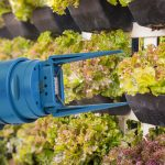 A new Vegebot has been programmed to harvest lettuce with machine learning.
