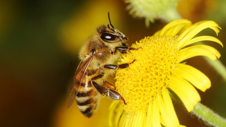The US Department of Agriculture recently announced that it was temporarily suspending data collection for the annual Honey Bee Colonies report.