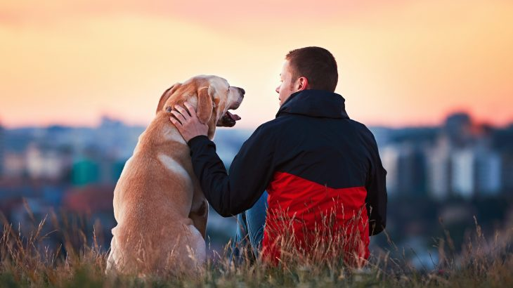A growing collection of studies has revealed that pets and owners share many of the same personality traits.