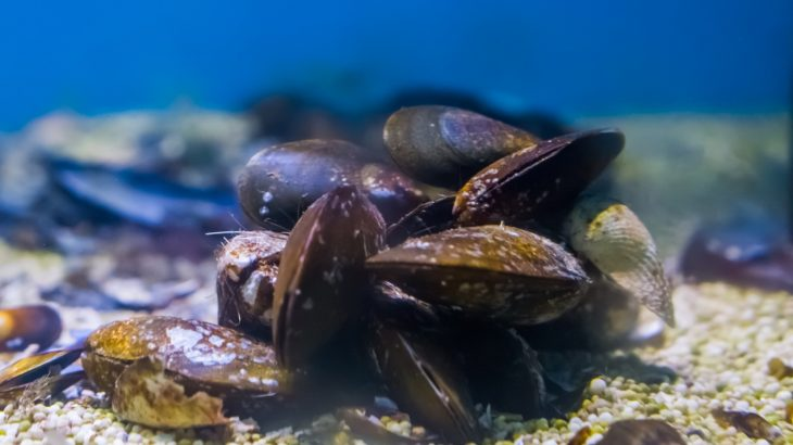 A new study has found that mussels are impacted on a molecular level by the sounds of ship motors.