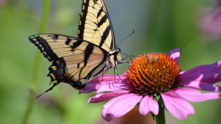 A decades-long program monitoring the butterfly abundance in Ohio has shown that the general abundance of butterflies in the region has declined 33% in the past 21 years.