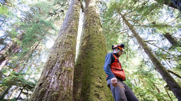 A new study has revealed that hundred-year-old Sitka spruce trees growing on Vancouver Island contain a remarkably high amount of genetic variation.