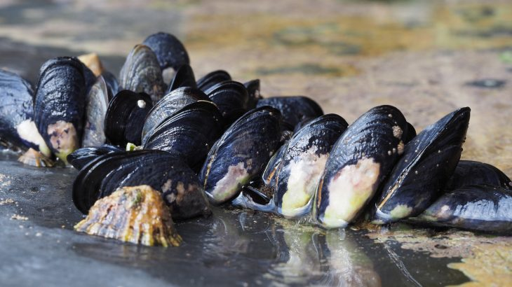 The same adhesive properties that allow mussels to aggressively attach themselves to boats also have widespread engineering applications.