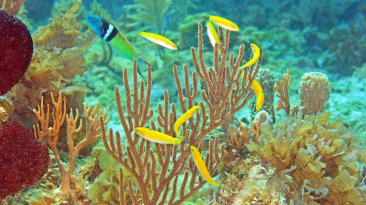 Nearly 500 species of can completely change their sex, including clownfish and the Caribbean bluehead wrasse.