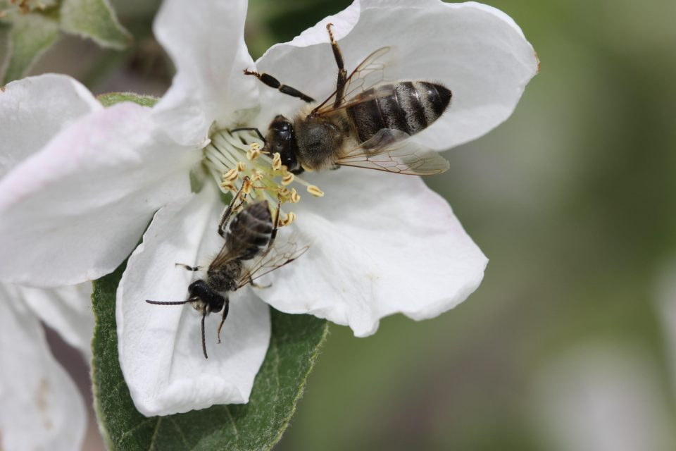 A new study is the first global assessment of how current trends in farming practices may be affecting pollinators and the crops that depend on them.