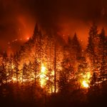 With a predicted increase in the number of forest fires and the intensity of them in the western US, it will likely boost populations of boring beetles and in turn woodpeckers.