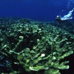 Researchers have found that increases in nitrogen levels are starving out corals and making them susceptible to bleaching.