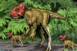 From meager beginnings, Auroraceratops rugosus went on to be recognized as one of the most well-documented early dinosaurs to date.