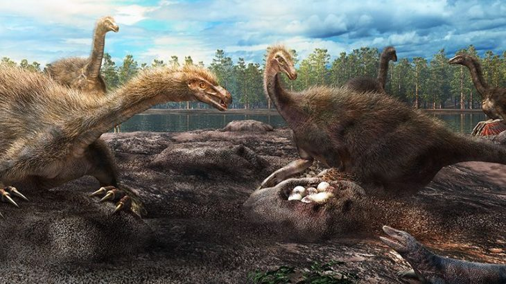 An 80-million-year-old dinosaur nesting site has revealed that mothers worked in groups to protect their eggs just like some birds do today.
