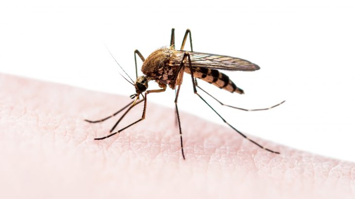 Scientists in China, led by Zhiyong Xi from Michigan State University, have nearly eliminated disease-carrying mosquitoes on two islands using a unique approach.