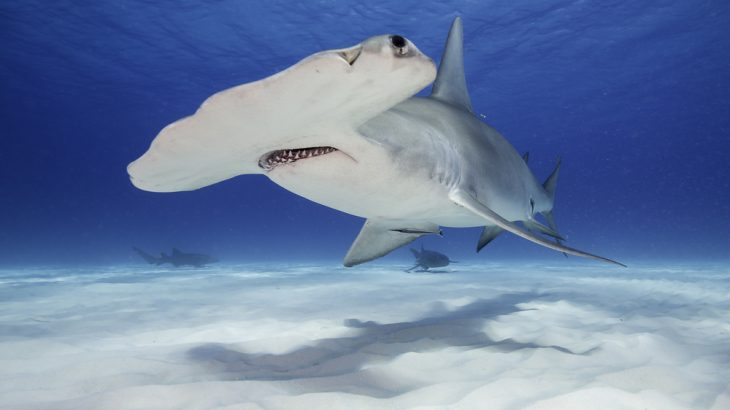 A hammerhead shark was spotted off the southwestern coast of Ireland during a marine survey.