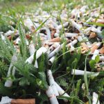 Trillions of cigarette butts are littered around the world every year, and it's having a negative effect on plant growth.