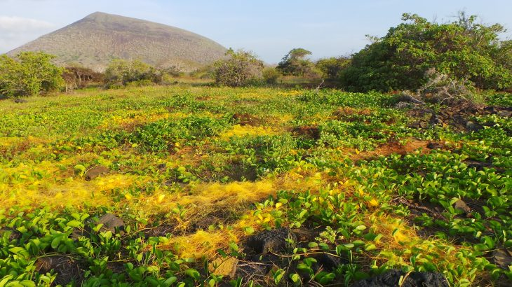 There are some parasitic plants that can steal genetic material from their host plants and use it to more effectively drain the host's nutrients.