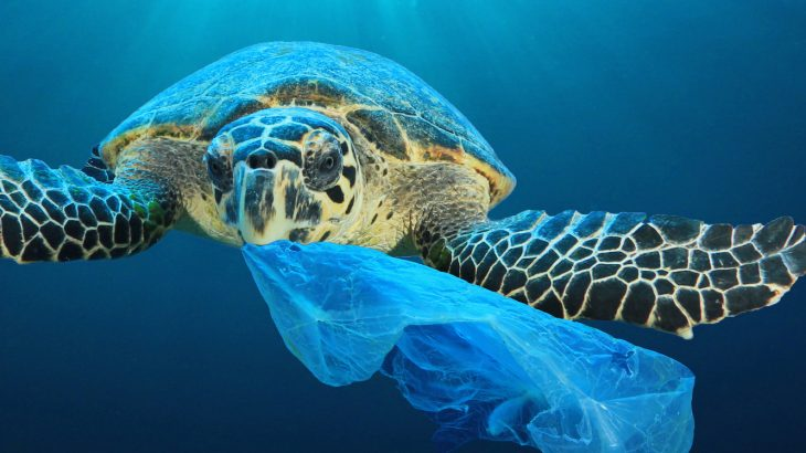 Panama has become the first country in Central America to ban single-use plastic bags, joining over 60 other countries that have either totally or partially banned them.