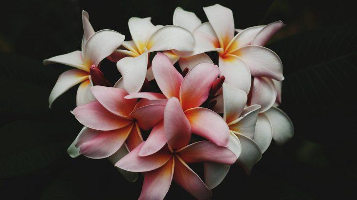 hawaii, flowers