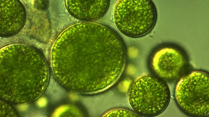 New research provides evidence that, over 500 million years ago, algae may have hitched a ride out of the water with fungi to colonize the land.