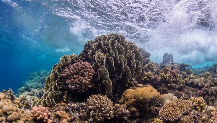 This is a shallow coral reef in the Central Red Sea. Bacteria help boost coral resilience in a changing environment, a new study has found. (Image credit: Anna Roik, University of Konstanz)