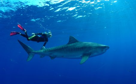 Because of the perceived danger that sharks pose to humans, protections for them are less popular than for many other iconic animals.