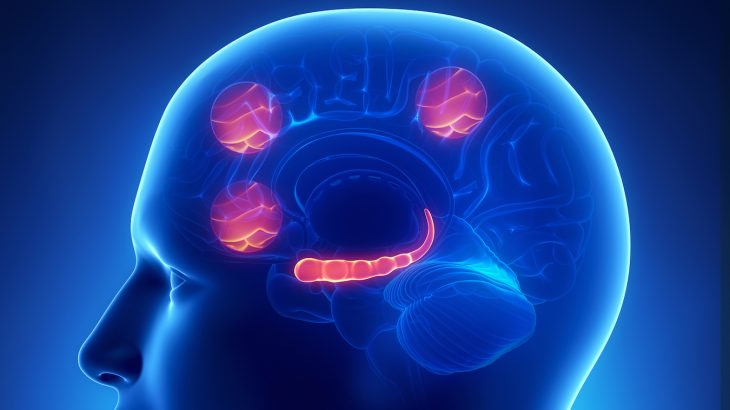In a new study, researchers analyzed neural activity in the prefrontal cortex which reflects the intention to drink alcohol.