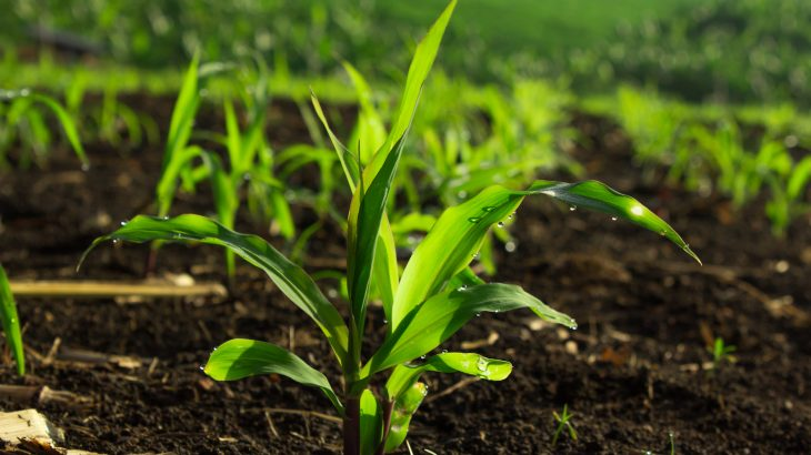 In a new study, researchers found that plants in soil leached by acid rain take up a significantly larger amount of water.