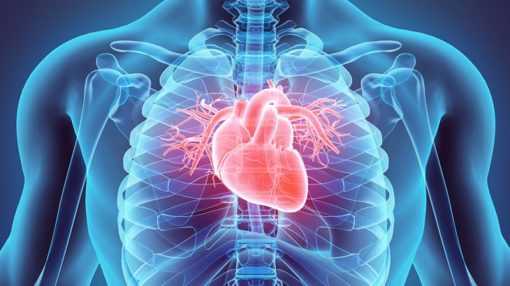 Preliminary research indicates that meth use may lead to increased deposits of collagen around the blood vessels of the heart.