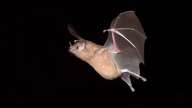 Researchers discovered that bats create a mirror image of their surroundings, using the soundwaves that bounce off leaves to their advantage.