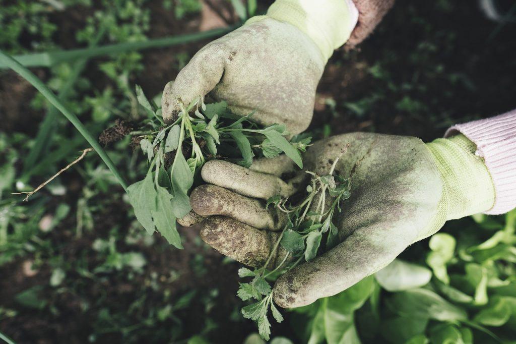 gardener gloves