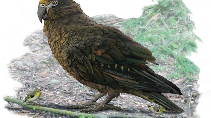 The first-ever giant parrot fossil has been located near St. Bathans in Central Otago, New Zealand.