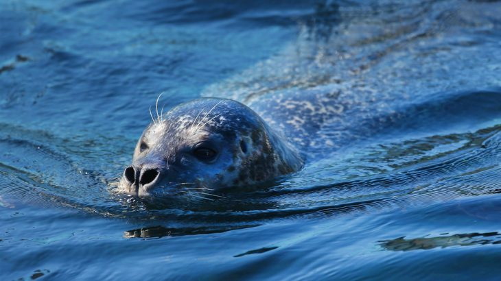 The Oregon coast is home to thousands of harbor seals year round, and now tracking devices are helping researchers understand the movements.