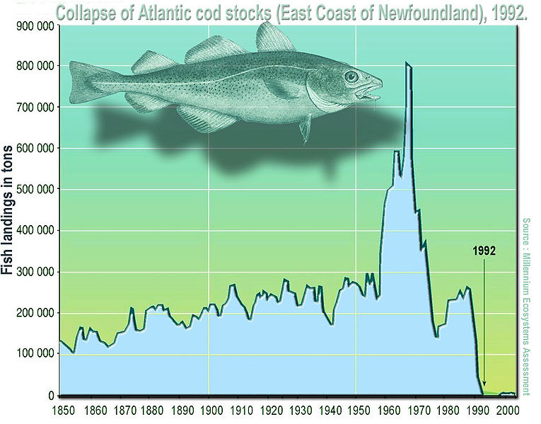 cod, atlantic cod, overfishing