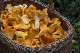 mushroom hunting basket foraging