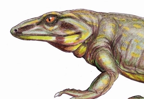 A new study has revealed that an extinct lizard-like creature suffered from a bone disease similar to Paget's disease 289 million years ago.