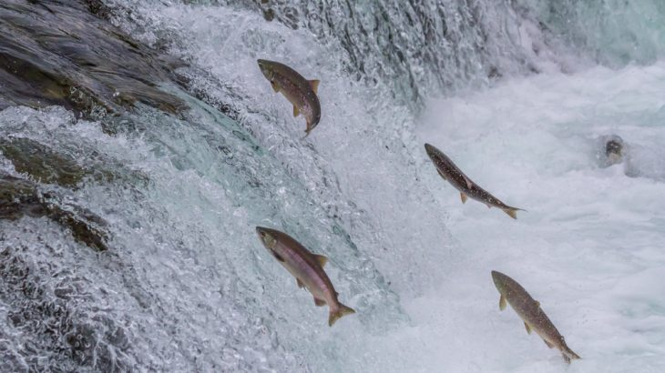 The EPA has withdrawn protections for a salmon fishery in Alaska's Bristol Bay, and agency insiders tell CNN the decision came after a meeting between President Donald Trump and the state's governor.
