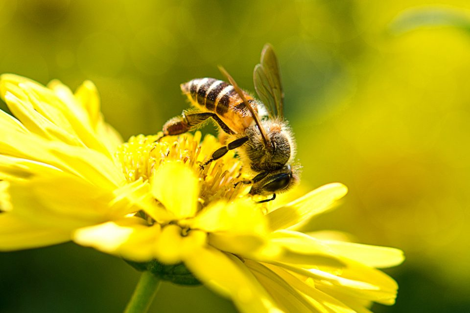 The reality is that bees play a critical role in feeding the world by pollinating the crops that feed 90 percent of the global population.