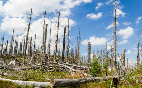 New research shows how large-scale tree death, mainly caused by fires, harvesting, windstorms, and insect outbreaks, has impacted the world's carbon stocks.