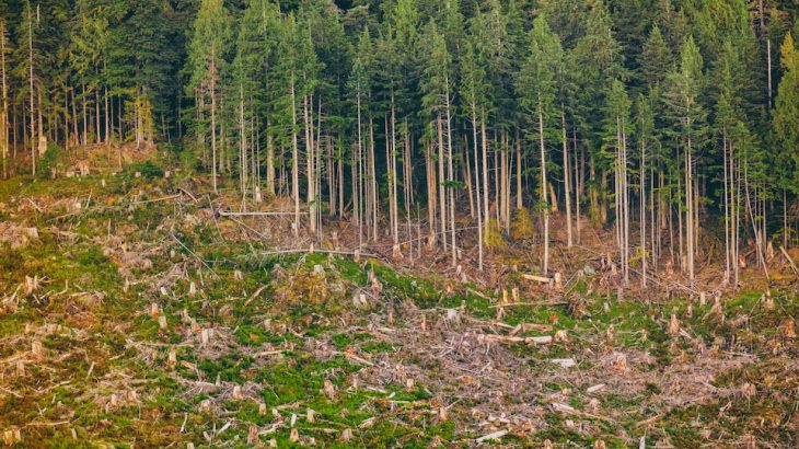 The United States is losing natural land at an alarming rate, according to a new report from the Center for American Progress (CAP).