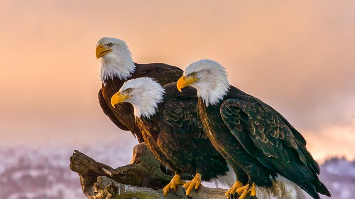 New changes to the Endangered Species Act drastically scale back protections issued to species threatened with extinction.