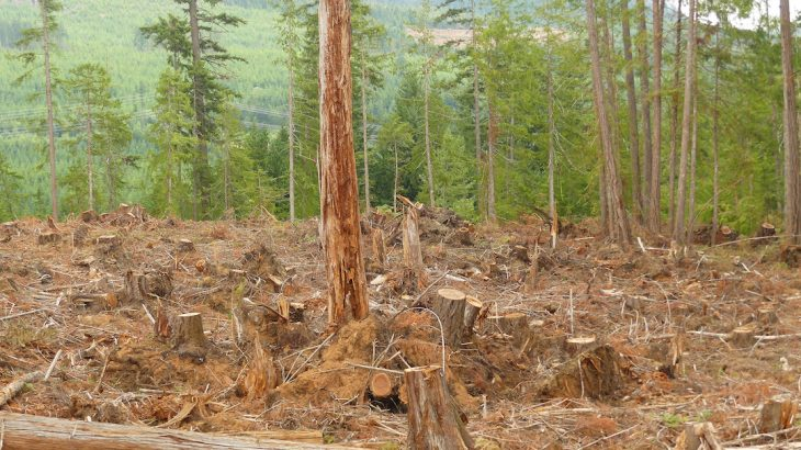 The new proposed rule outlined in Trump's executive order would allow the US Forest Service to authorize forest clearcutting without an environmental impact statement or public input.
