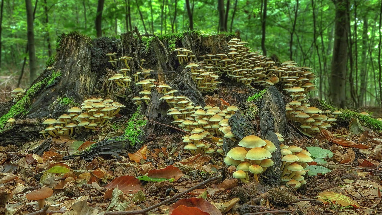 log, mushroom