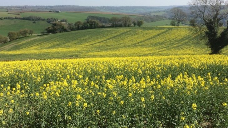 Researchers from the University of Bristol have found that taking advantage of a plant's circadian rhythm could help reduce the amount of herbicide needed for spraying crops.