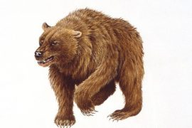 Experts have genetically reconstructed the history of the cave bear and found that it was likely humans, and not colder climate conditions, that drove the species to extinction.
