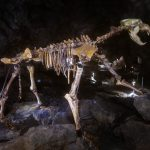 A new DNA study hints that modern humans may have played a role in the extinction of cave bears in prehistoric Europe.