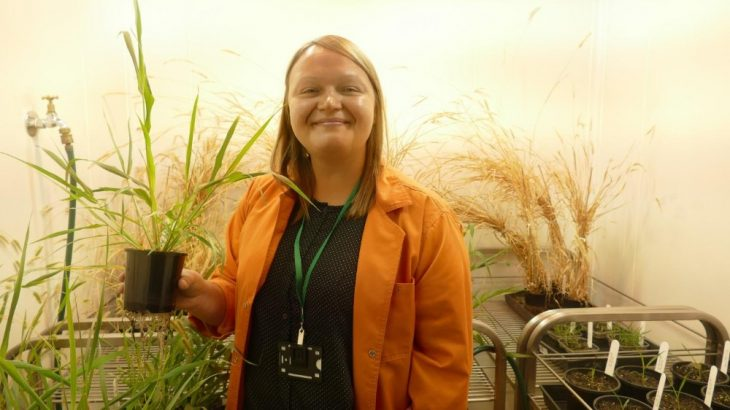 Dr. Maria Ermakova holds a Setaria plant that has been transformed to boost photosynthesis. Triggering production of a specific protein can increase the process plants use to create their own food. (Image credit: Natalia Bateman, ARC Centre of Excellence for Translational Photosynthesis)